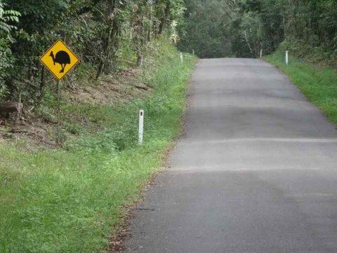 Beware of cassowaries