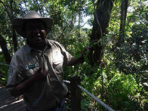Jeremy - Rainforest Guide